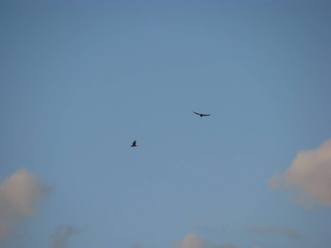Even the Birds flying overhead were cold Wednesday