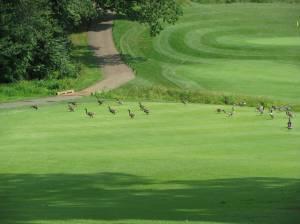 Old Trail Golf - Crozet, Virginia