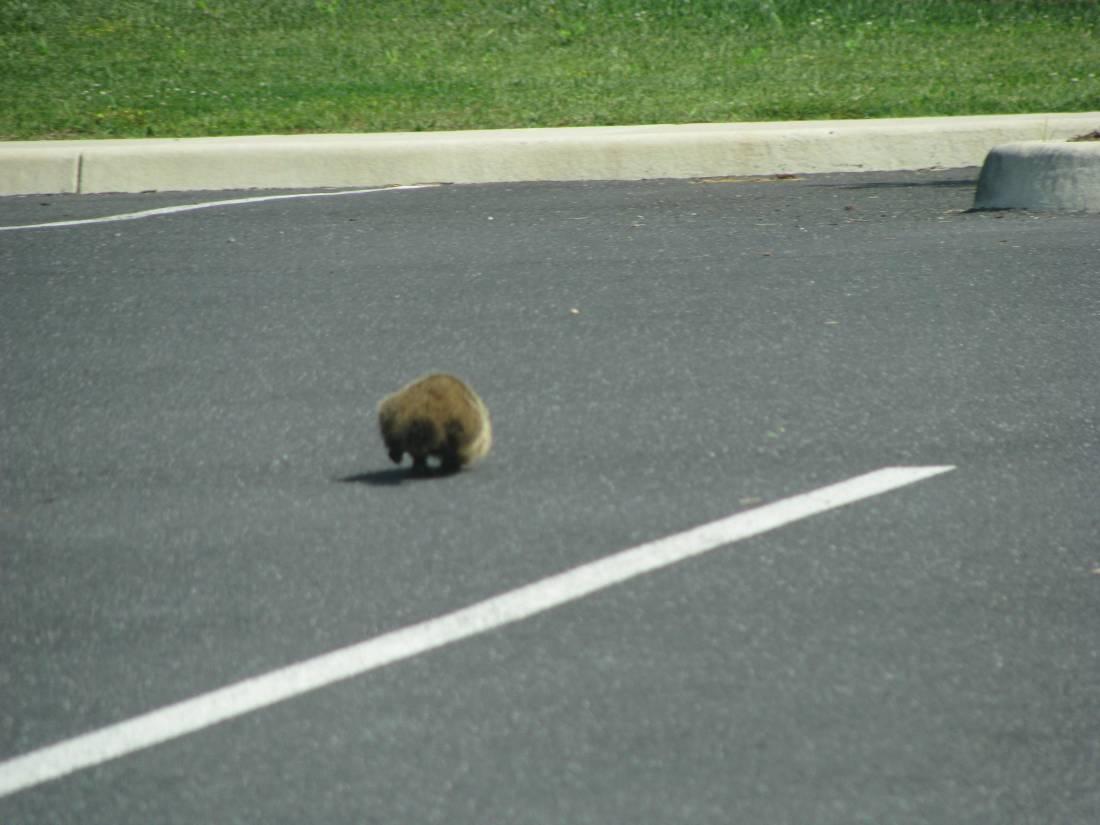 Here's the little critter running away.